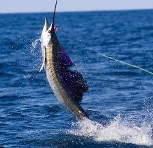 Sport Fishing for a Sustainable Future